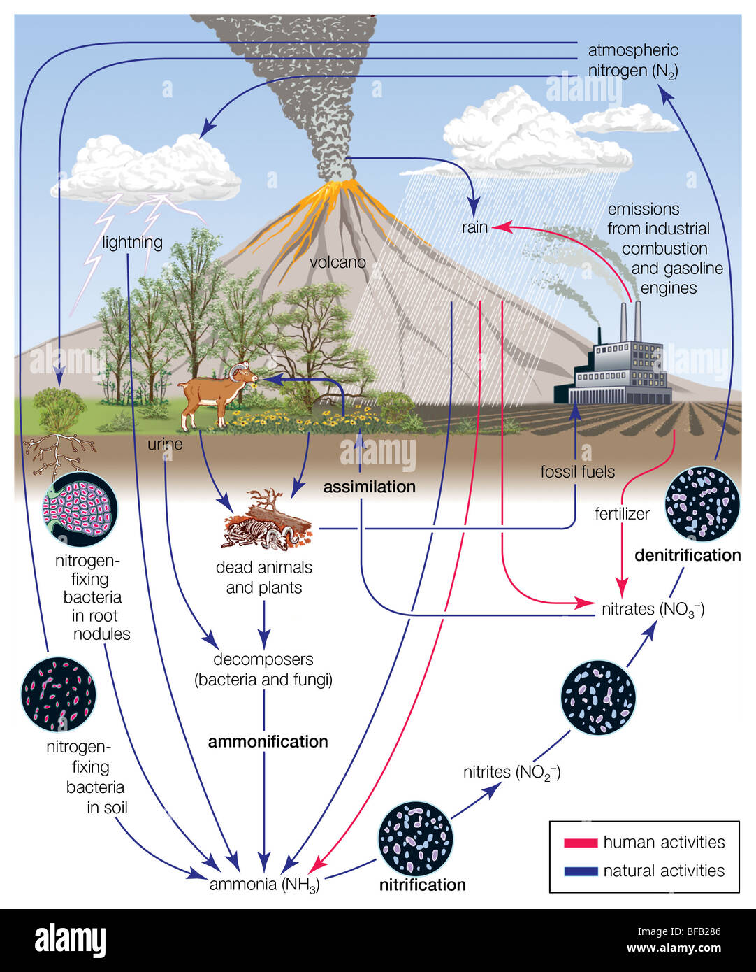 hight resolution of nitrogen cycle stock image
