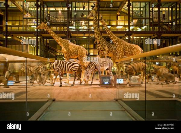 Large Of Evolution Museum