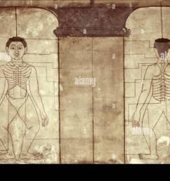 diagram of thai massage points wat po bangkok thailand southeast asia asia [ 1300 x 945 Pixel ]
