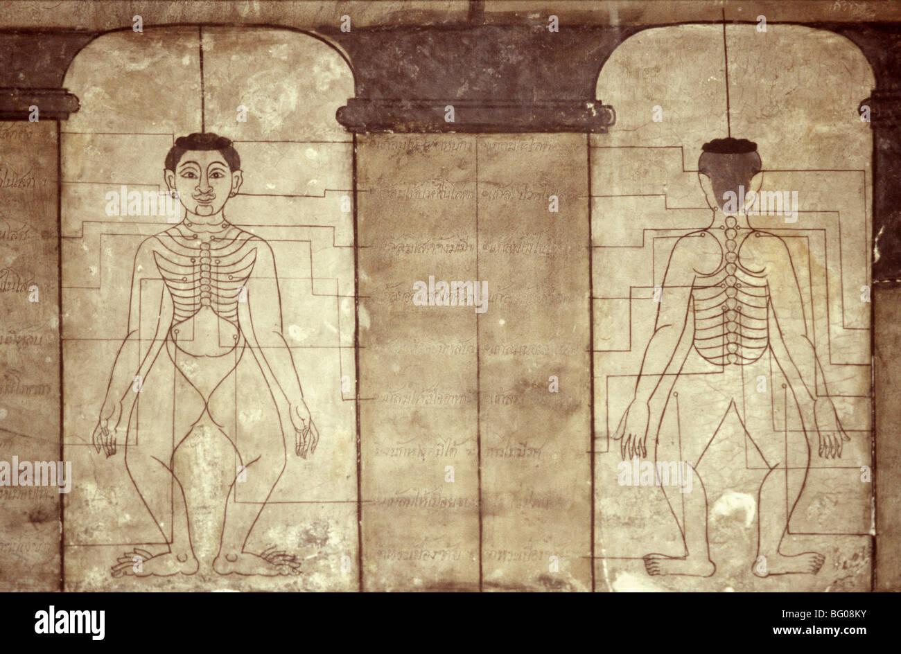 hight resolution of diagram of thai massage points wat po bangkok thailand southeast asia asia