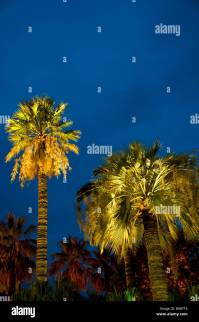 Nice, France, Palm Trees, lit up, at night, in Exotic city ...