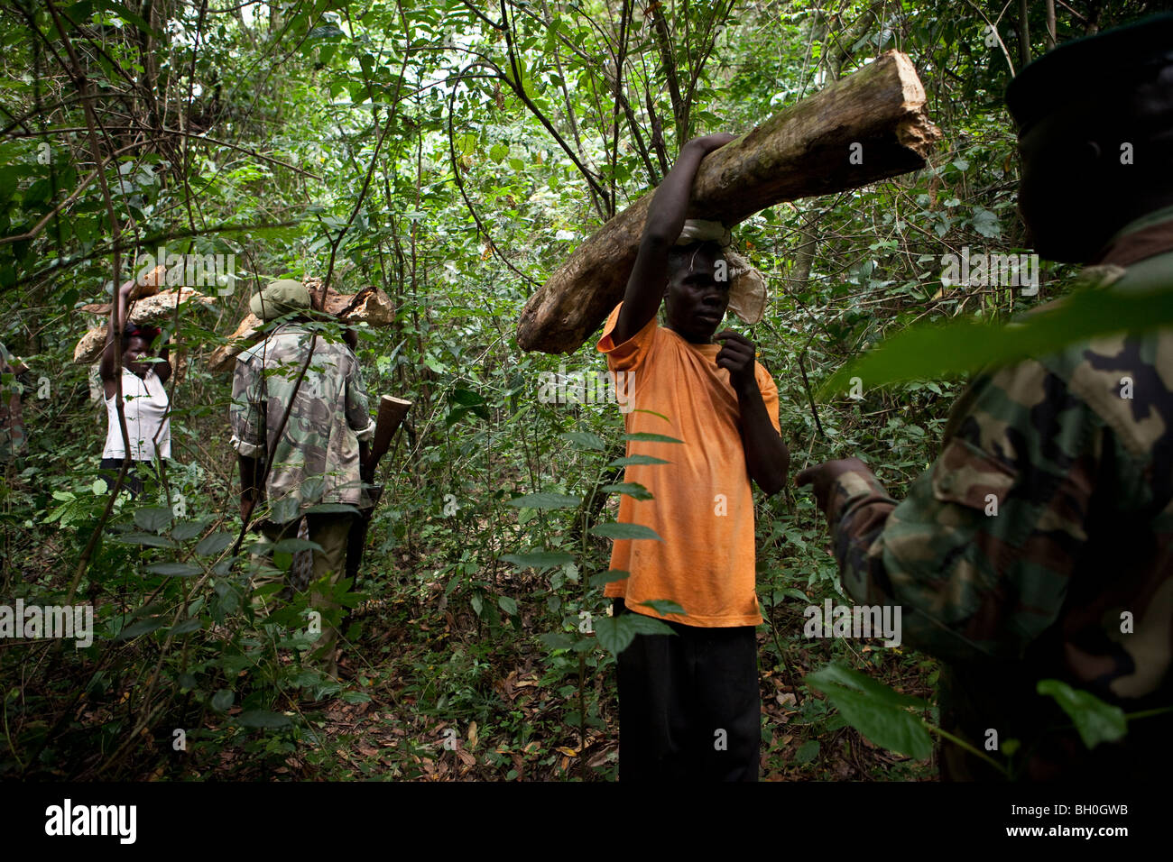 Many state forest lands were in poor condition when acquired, either eroded or heavily timbered. Rangers Confront Poachers In The Kakamega Forest Reserve A Protected Forest In Western Kenya Stock Photo Alamy