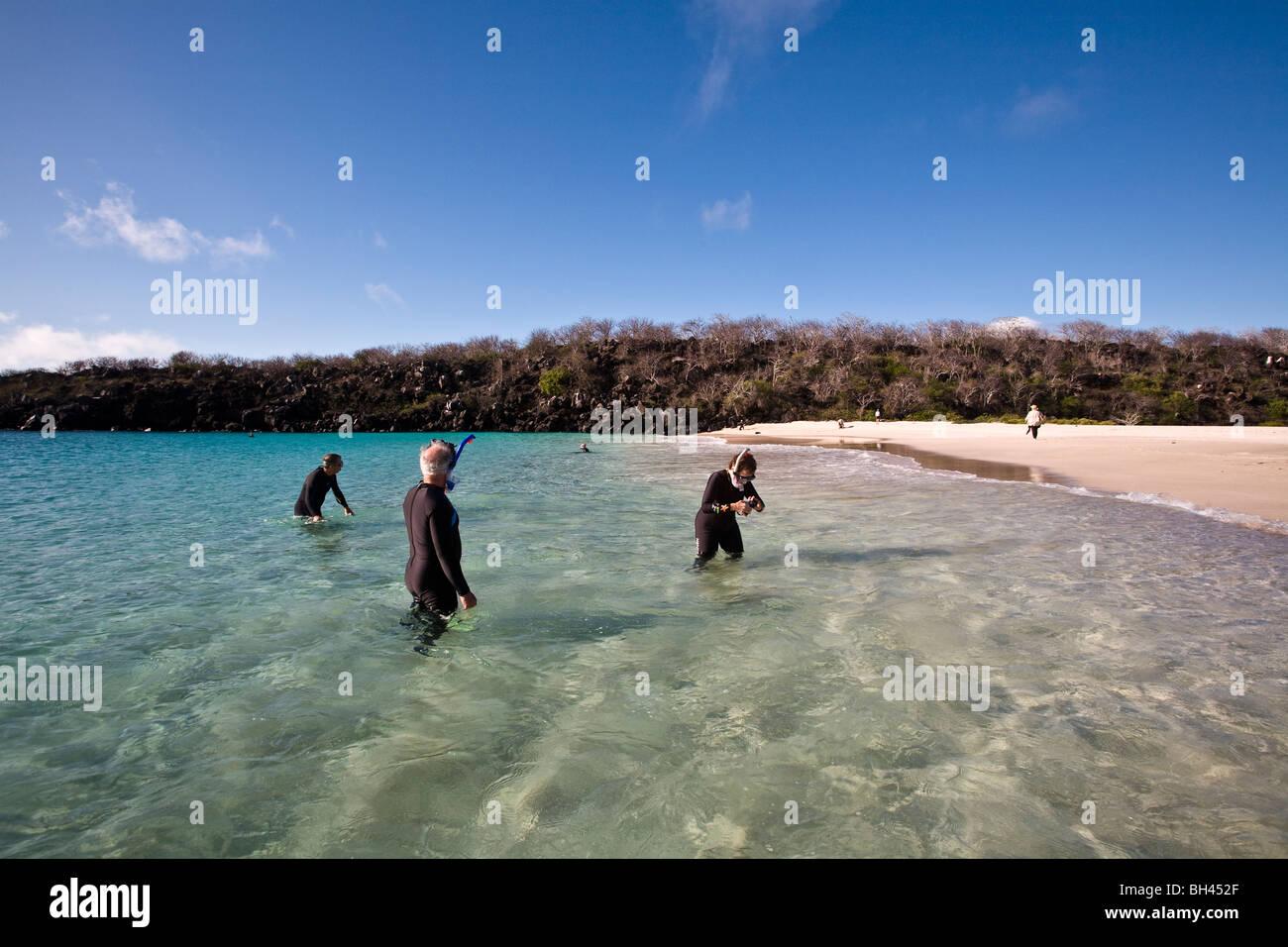 Galapagos Islands Snorkeling Stock Photos Amp Galapagos Islands Snorkeling Stock Images