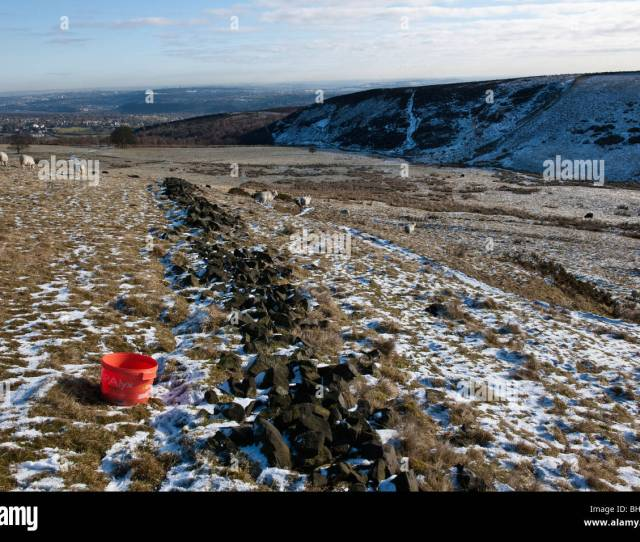 Red Tub Of Winter Vitamin Supplements For Sheep And Lambs In Moorland Fields At Totley Moor