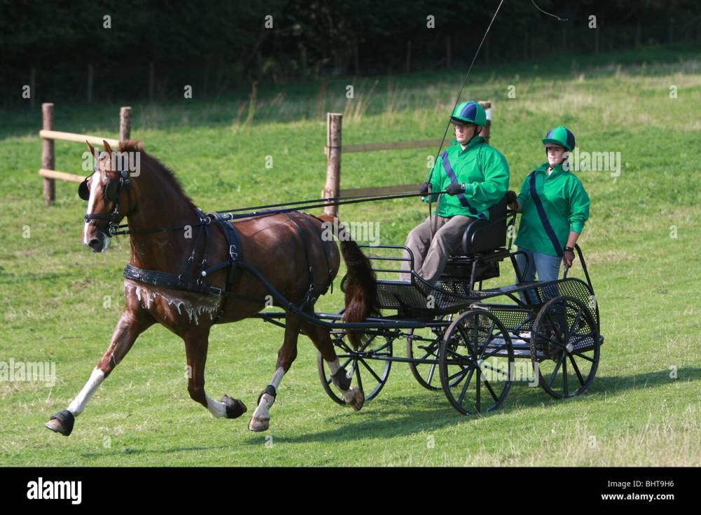 medium resolution of pony harness club trial competition at goodwood west sussex england uk