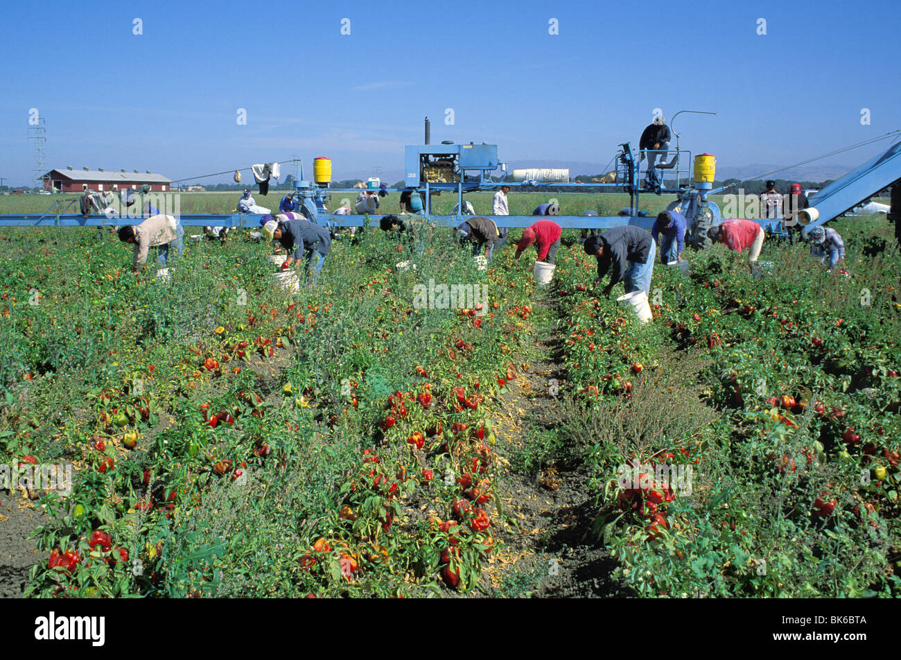 Migrant Workers California Stock Photos  Migrant Workers
