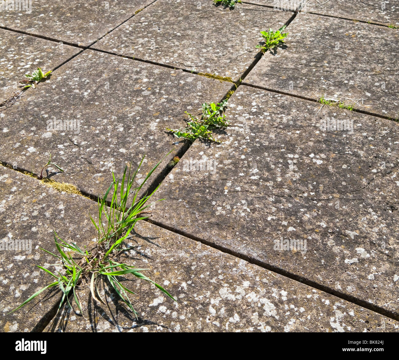 Pavement Weed Stock Photos & Pavement Weed Stock Images