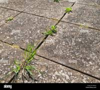 Pavement Weed Stock Photos & Pavement Weed Stock Images ...