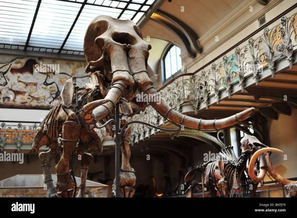 Natural History Museum In Paris Grande Galerie De L