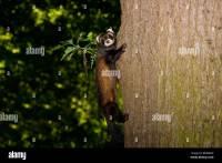 Cat Climbing Stock Photos & Cat Climbing Stock Images - Alamy