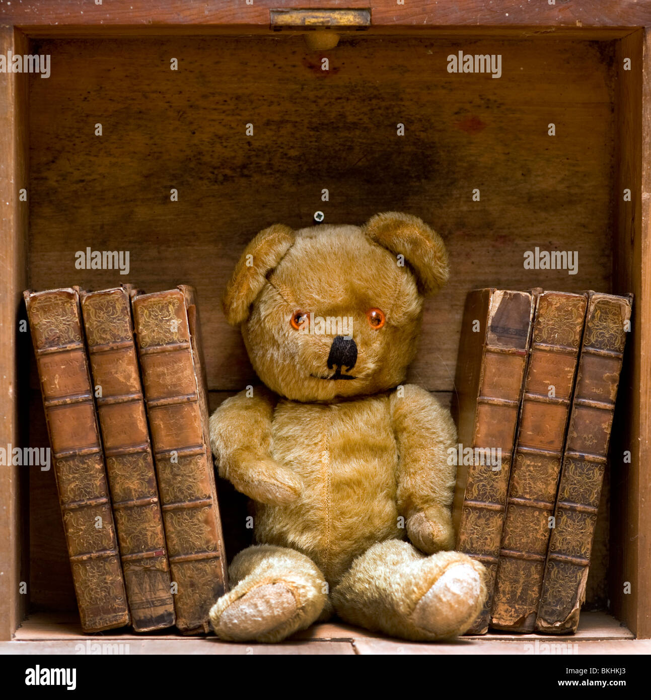 Teddy Bear With Old Antique Books On Bookshelf Stock Photo