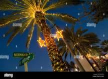 Palm Tree Christmas Lights Stock &