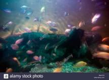 National Aquarium Dominican Republic