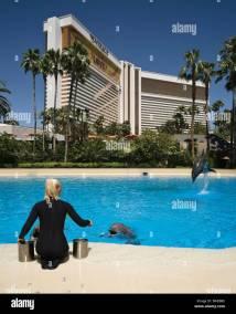 Dolphin Pool Mirage Mgm Resort Hotel Las