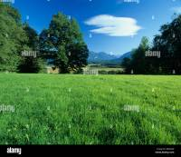 Germany Murnauer moss nature plants trees meadow field ...