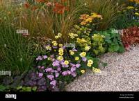 Mixed planting in a gravel garden border with Achillea and