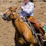 Cowgirl Riding Her Horse In A Calf Cutting Competition Chaffee Stock Photo Alamy