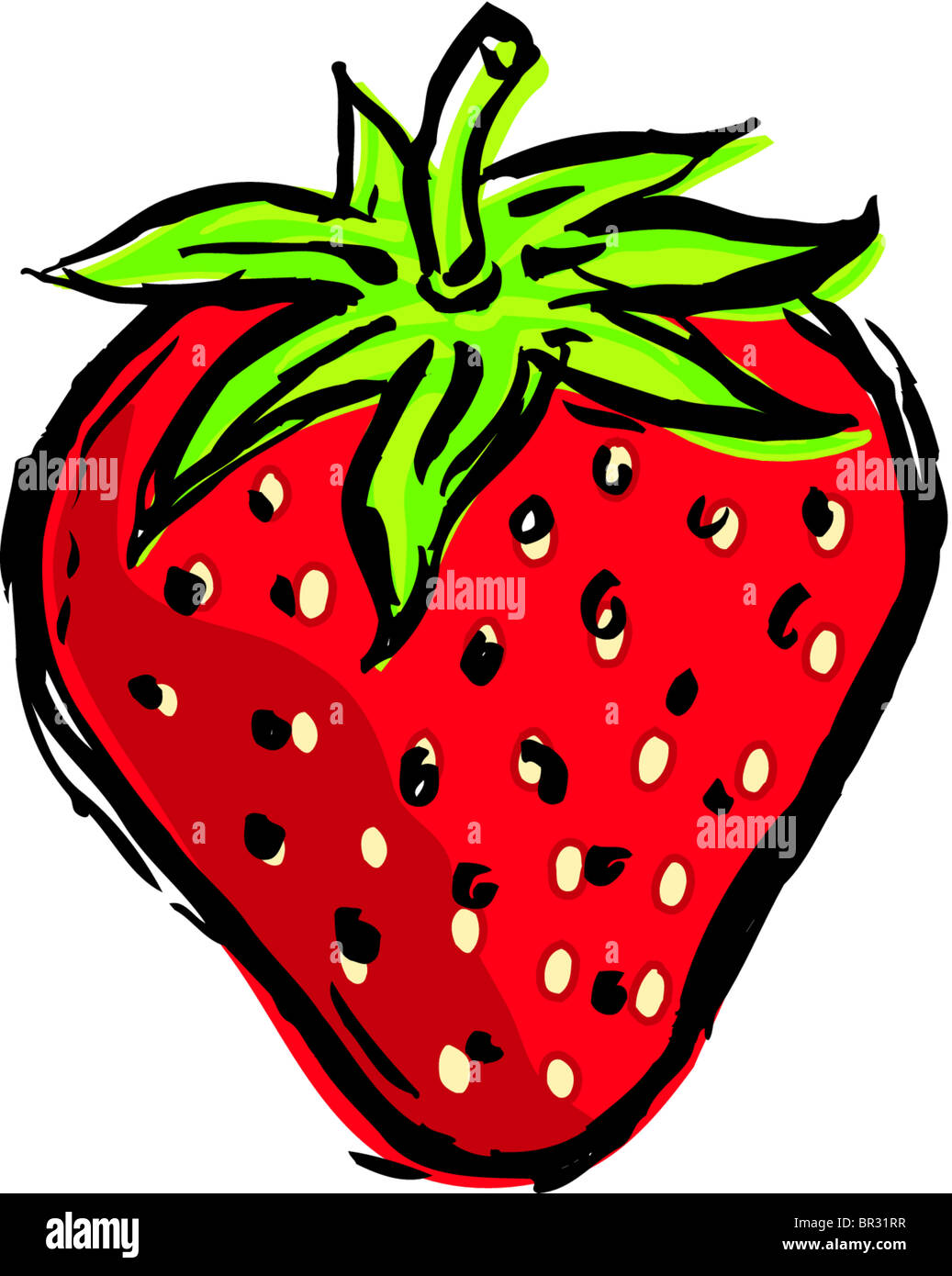 Strawberry Drawing Cute : strawberry, drawing, Strawberry, Drawing, Resolution, Stock, Photography, Images, Alamy