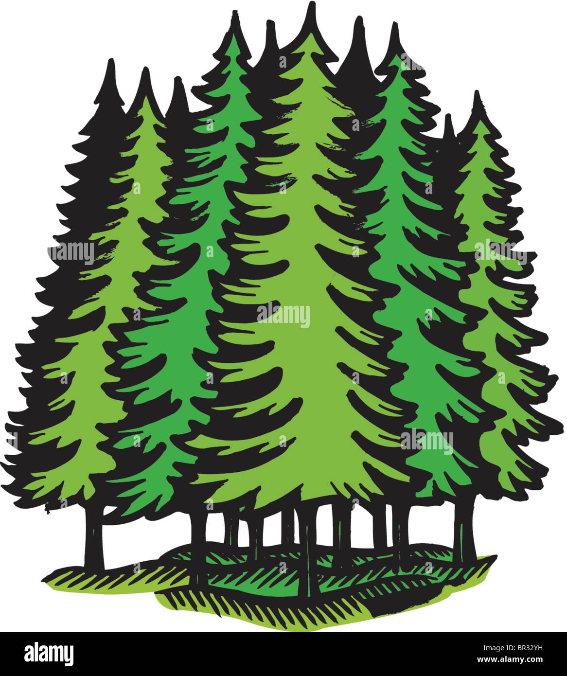 Wild animal of forest symbol of russia drawing by popaukropa 1 / 76 vector silhouettes tree on white background stock illustration by basel101658 6 / 648 vector silhouette bird on tree stock illustrations by basel101658 13 / 1,418 wild coniferous wood at sunset. An Illustration Of An Coniferous Forest Stock Photo Alamy