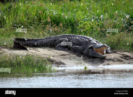 Image result for Murchison Falls National Park pictures