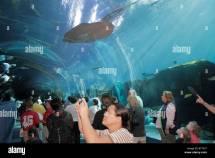 Atlanta Georgia Pemberton Place Aquarium