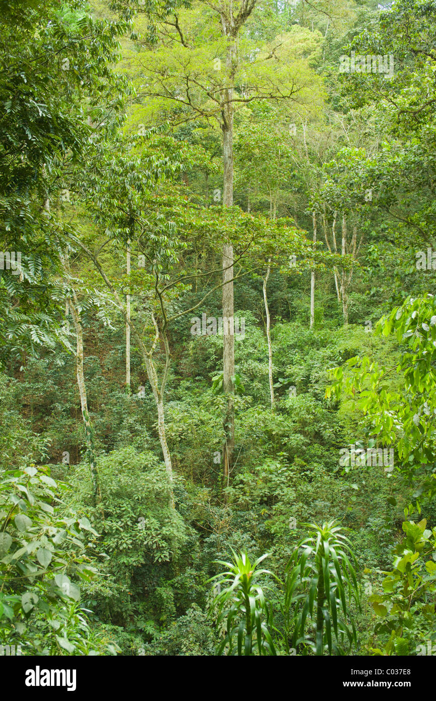 Rainforests are populated with insects (like butterflies and beetles), arachnids (like spiders and ticks), worms, reptiles (like snakes and lizards), amphibians (like frogs and toads), birds (like parrots and toucans) and mammals (like sloths and jaguars). Equatorial Forest High Resolution Stock Photography And Images Alamy