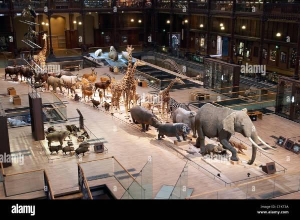National Natural History Museum