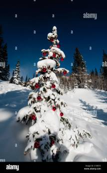 Angle View Of Snow Covered Christmas Tree Dream