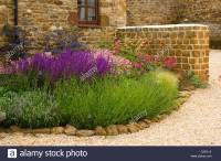 Corner of Gravel garden with border of Astrantia Roma ...