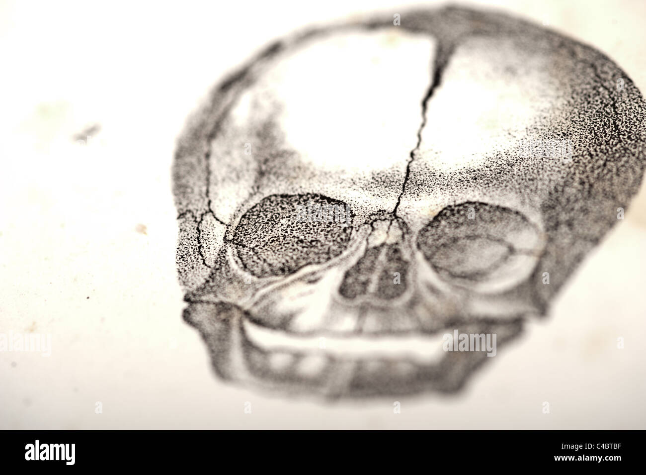 hight resolution of illustration of fetus skull circa 1844 macro selective focus stock image
