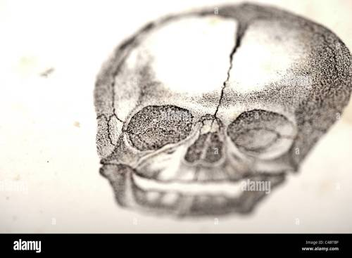 small resolution of illustration of fetus skull circa 1844 macro selective focus stock image