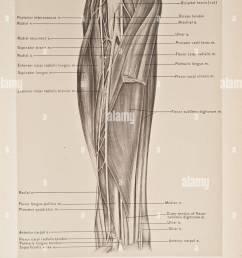 illustration of human arm copyright 1899 [ 959 x 1390 Pixel ]