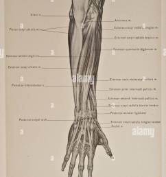 illustration of human arm copyright 1899 [ 815 x 1390 Pixel ]