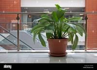 Office plants. Flower pot in office building Stock Photo ...