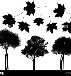 set of vector trees and maple leaves silhouettes stock image [ 1300 x 1176 Pixel ]