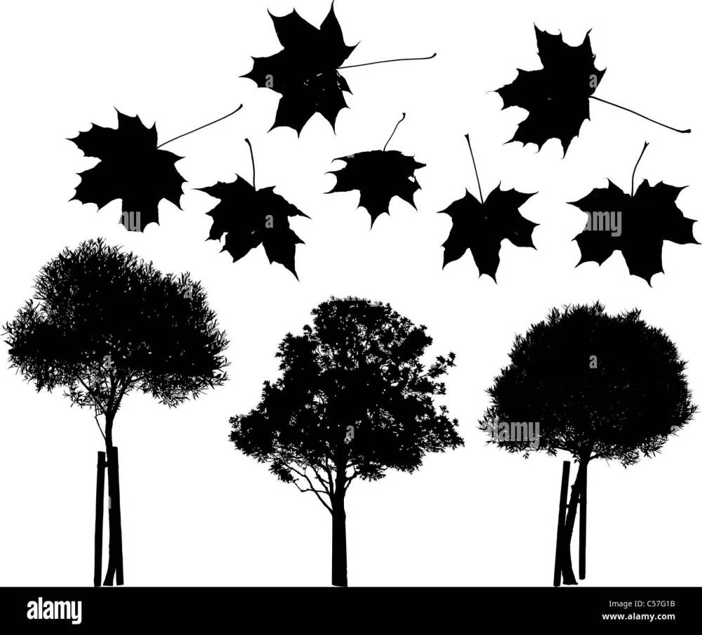 medium resolution of set of vector trees and maple leaves silhouettes stock image
