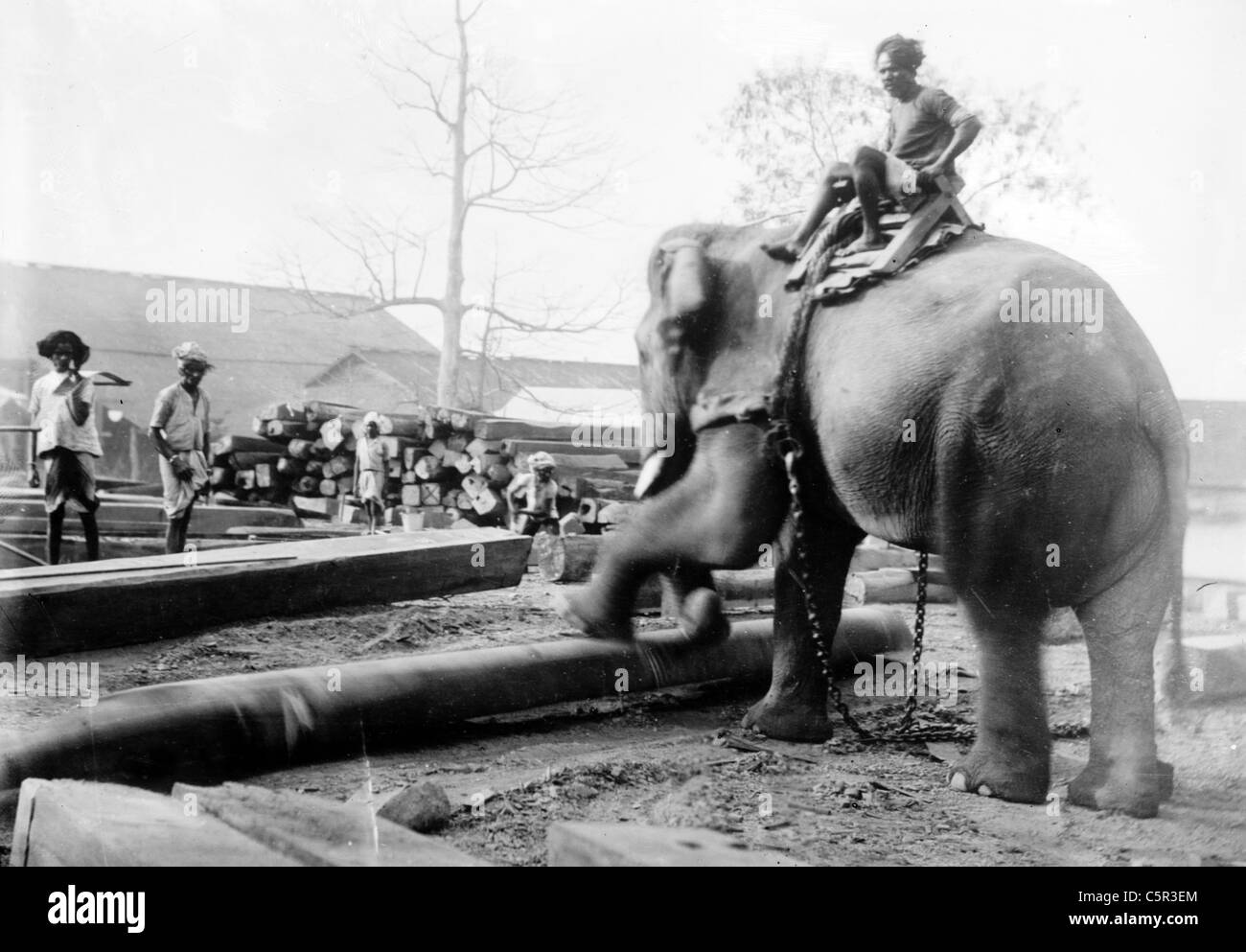 Elephant Working India Stock Photo Royalty Free Image