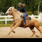 Western Bridle High Resolution Stock Photography And Images Alamy