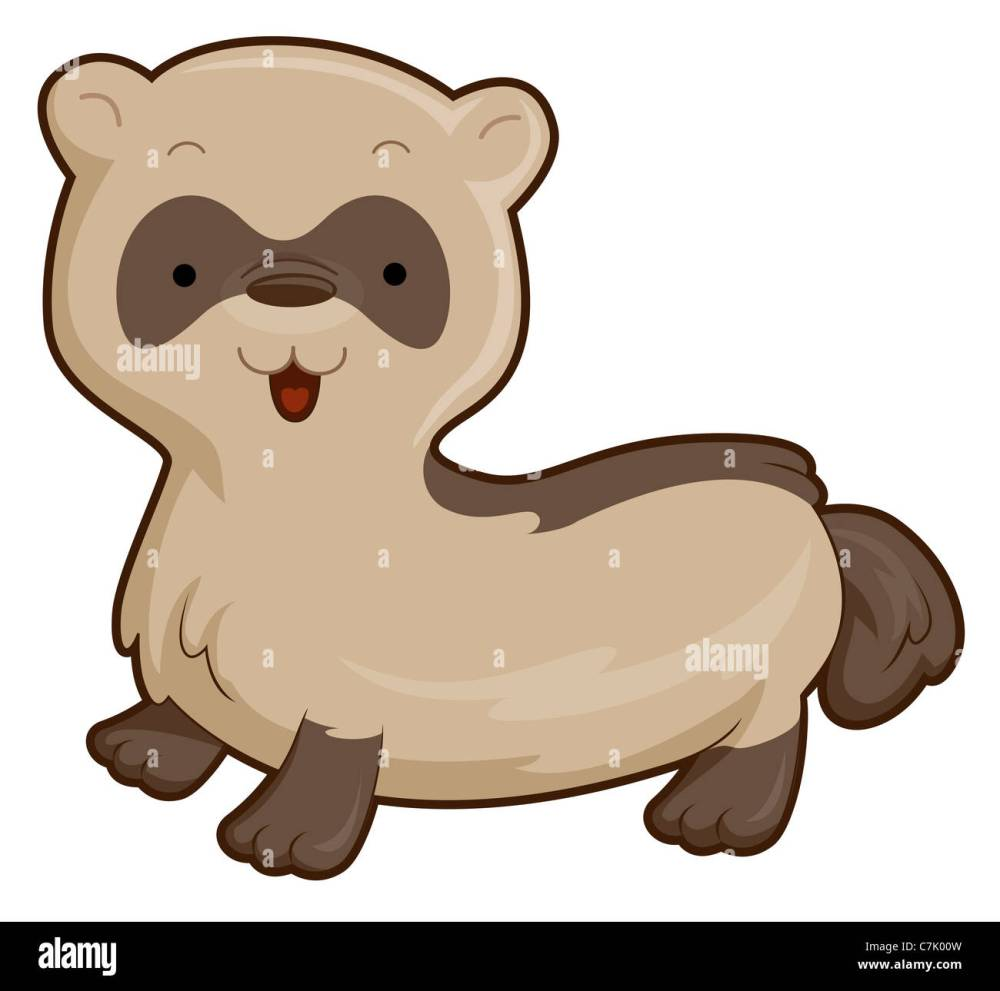medium resolution of cute ferret with clipping path stock image