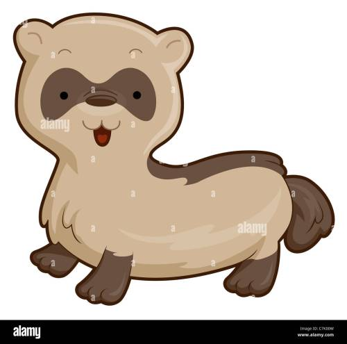 small resolution of cute ferret with clipping path stock image