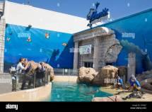 Seals Frolic Atlantis Marine World Aquarium