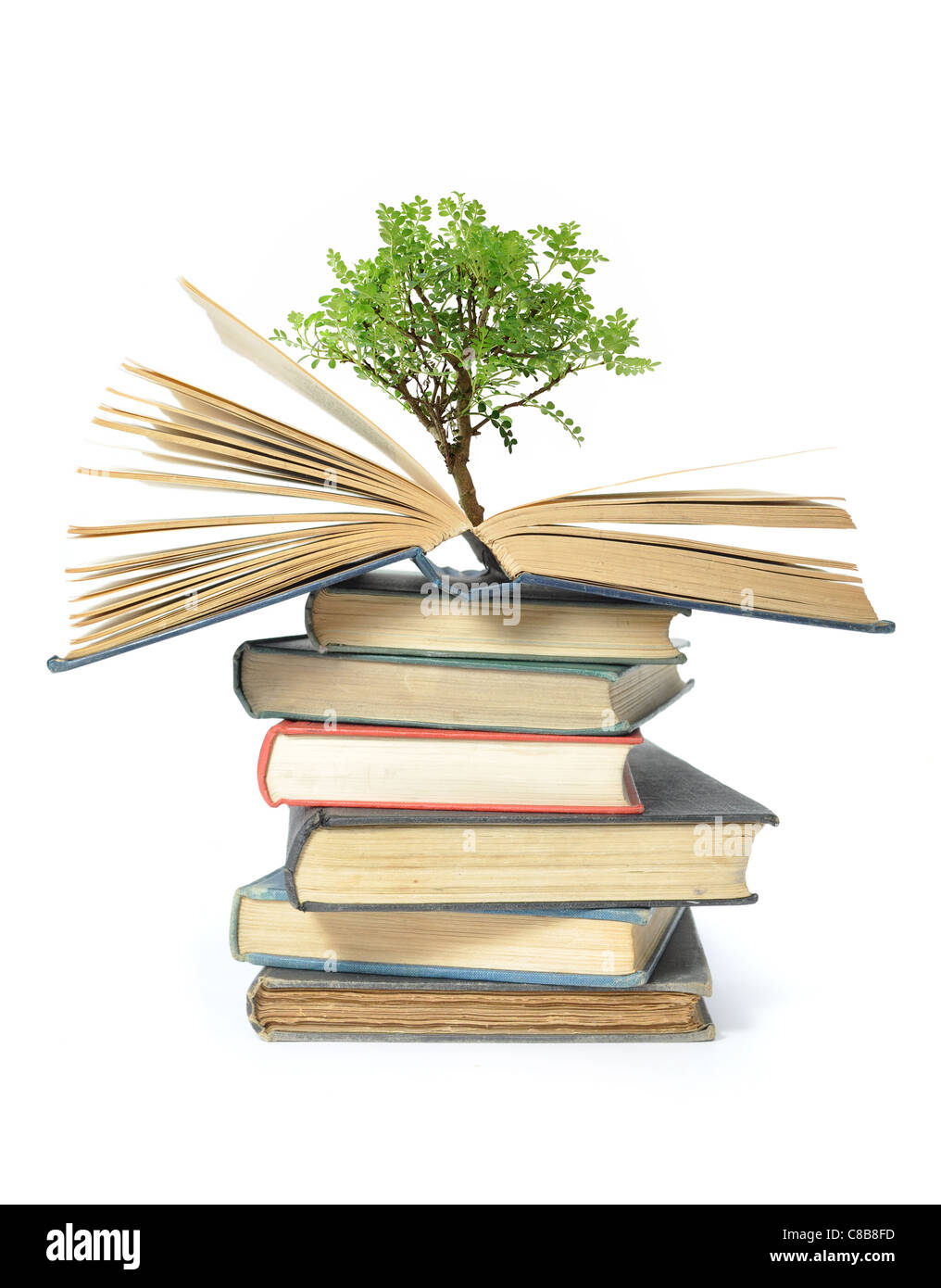 hight resolution of isolated image of a tree growing from an open book