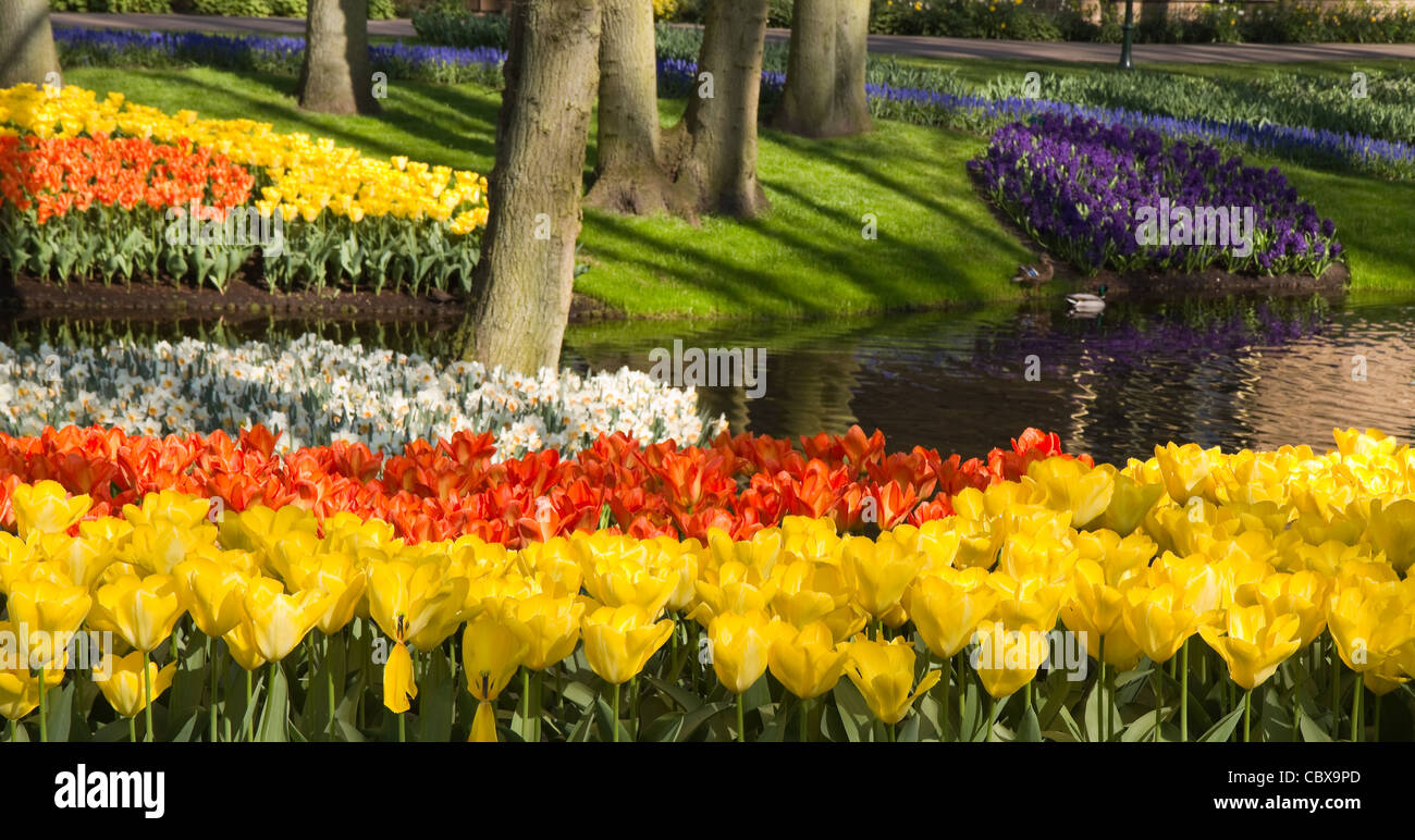Tulips Hyacinths Spring Daffodils Seasonal Stock Photos