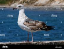 Seagulls Sitting On Pier
