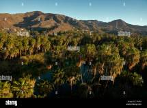 Mulege Baja California Mexico Landscape Palm Trees