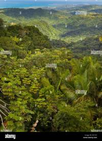 EL YUNQUE NATIONAL FOREST, PUERTO RICO - Jungle canopy in ...