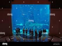 Atlanta Aquarium Dubai Stock 47284721 - Alamy