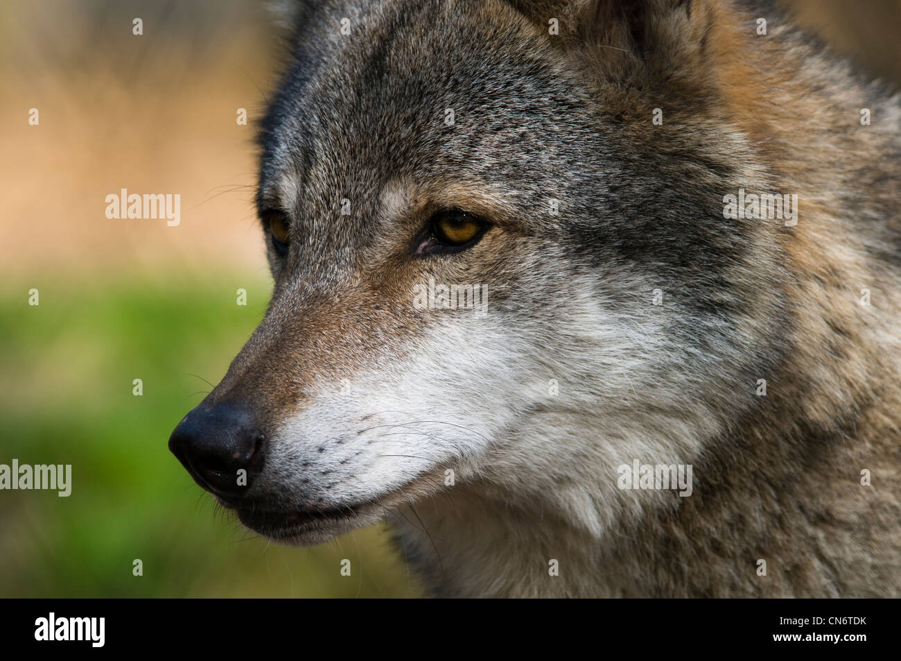 how to wolf whistle diagram 480v 240 120v transformer wiring list of synonyms and antonyms the word muzzle
