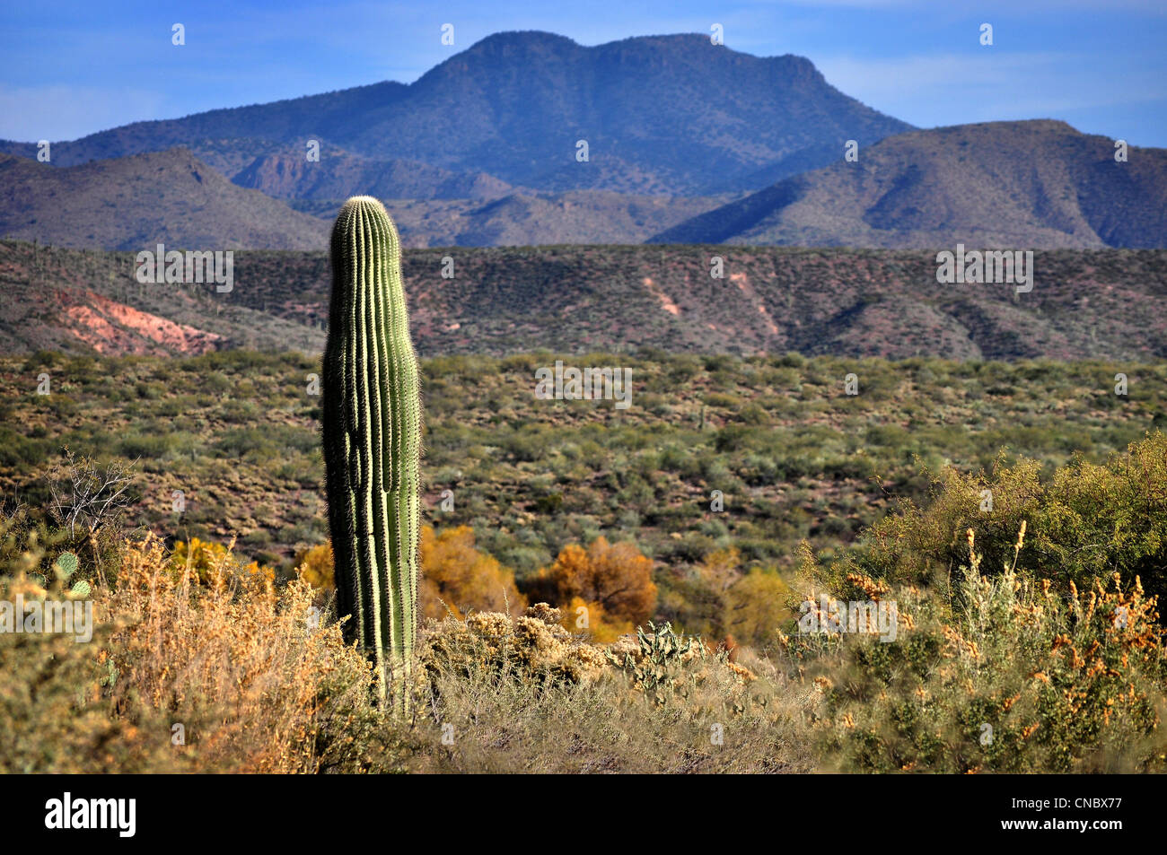 arizona desert landscape with