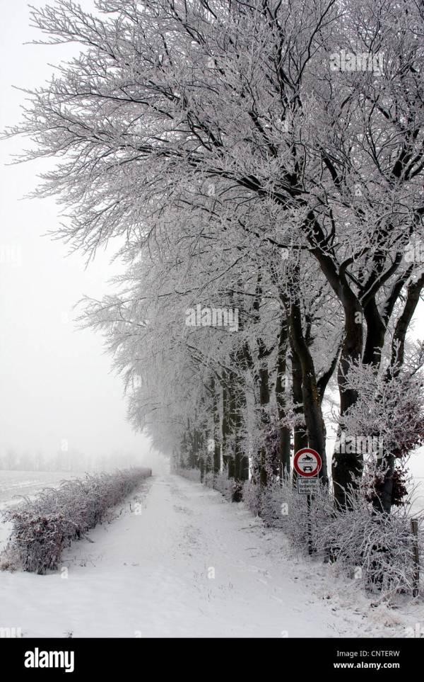 winter landscape in eifel germany